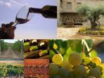 Ruta del vino de nuestra comarca