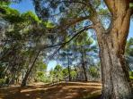 A perfect place to relax in the shade of the pines