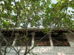 Ambassador's House - Courtyard tree canopy