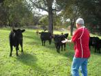 Guest meeting Jilba Cattle