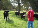 Guest meeting Jilba Cattle
