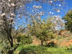 Our orchards have a variety of fruit trees - you are free to help yourself to fruit in season