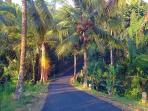 Road to our village