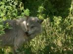 Wolf Image I took at the Wolf Centre in Haliburton Forest