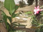 Terrace with sun lounges through garden