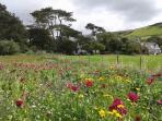 our wild flower area