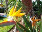 Bird of Paradise & Nicely planted private Garden