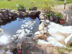 See if you can spot our 4, very illusive, goldfish. The frogs are not so shy.