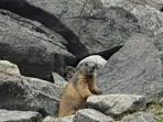 Wildlife encountered during trekking