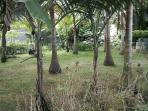 Le jardin, calme et accueillant...