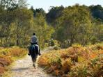 Horse Riding in the New Forest
