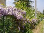Villino Bianca Front Garden