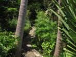 The garden path through the jungle in  the grounds
