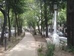 Neighborhood, 'Camellón' Streets (walk or Central Avenue sidewalk of a street or wide Trees&plants)