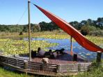 Lily pond, Angels Rest Farm