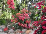 Blooms :)