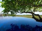 Sanur Residence - Overhanging frangipani tree