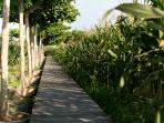 Sanur Residence - Path to the beach through the paddy fields