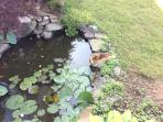 Koi Pond From Deck
