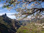 Almendro en flor Enero 2015 - Almond blossom January 2015