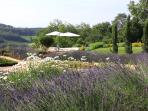 Row of Lavender attract hundreds of butterflies every year and adds a sweet scent to the air.
