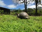 Picture taken at the property where Giant Tortoises feed.