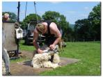 Shearing time on the farm during June.