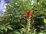 Butterflys love it here