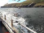 FISHING THE WILD ATLANTIC WAY
