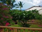 Gardenview unit with seasonal peek of the ocean