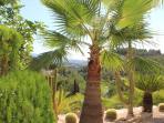 Palmgarden