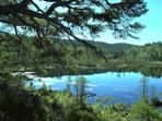 The walk through Glen Affric nature reserve is stunning