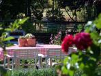 Special corner in our vegetable garden
