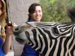 Sweet tooth Zebra, we don't share unnatural foods, but a classic photo instead