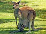 OPEN NATURAL BUSH LAND where you can see and feed kangaroos 5 min. from property