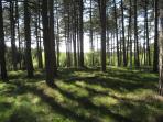 Pine forest, Tisvilde Forest (0.5 km)