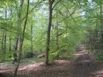 Beech forest, Tisvilde Forest (0.5 km)