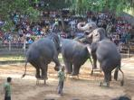 Colombo Zoological Garden- 3Km away from the property! Enjoy the Elephant Show with Many Atractions