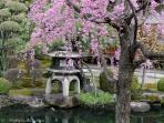 The garden of Shossibo Temple within Toji Temple in April