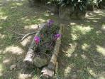 Salomon's bromeliads/las bromelias de Salomon