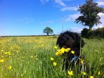 Loki in the Buttercups.. We have 2 lovely dogs.  Loki and Rex.. We are dog Friendly..