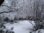 Garden in the snow.