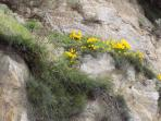 Skyros autumn wildflowers