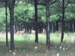 Flora and fauna abound on Columbia Woodlands' 400 acres.