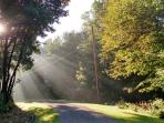 The suns' rays stream through the early morning dew at Columbia Woodlands.