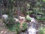 excursiones por los bosques.