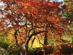 Autumn colours are spectacular
