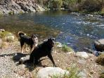 'T' Park's fishing & swimming hole is perfect for dogs, kids & fishers