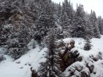 My Rocky Outcrop and Fir trees.