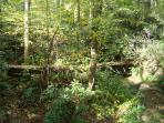 RED CREEK CABIN: Woodlands with rushing creek below the cabin